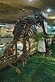 Probactrosaurus.jpg