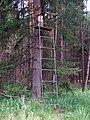 Prochody, posed v lese.jpg