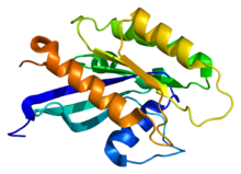Protein RAB18 PDB 1x3s.png
