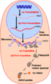 Proteinsyntes swe pic 010607.png