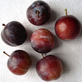 Prune - Raw plums which have not been dried into prunes