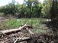 Psilskyi Landscape Reserve (05.05.19) 03.jpg