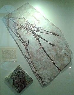 <i>Nurhachius</i> genus of reptiles