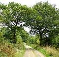 Public Bridleway along Bush Lane from Rusper-Horsham Road to Owlcastle Farm, Faygate, West Sussex - geograph.org.uk - 60714.jpg
