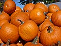 Pumpkin pile 01.jpg