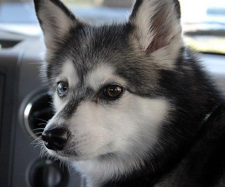 Pup in car (1)