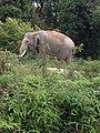 Pusat Latihan Gajah Riau 08.jpg