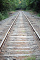 Railroad Tracks In Woods.jpg
