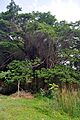 Ranganathittu Bird Sanctuary 02.jpg