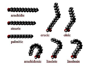 Three dimensional representations of several fatty acids