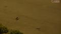 Rat running inside Cheung Hong Estate EVA 20200211.png