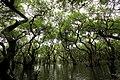 Ratargul Swamp Forest, Sylhet (1).jpg