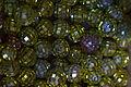 Rattenberg - Glasmotiv 012.jpg