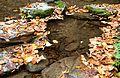Rešovské vodopády na podzim 04.jpg
