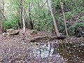 Reflejo en la charca - panoramio (1).jpg