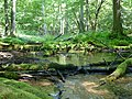 Rezerwat Diabli Skok - panoramio.jpg