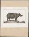 Rhinoceros javanicus - 1700-1880 - Print - Iconographia Zoologica - Special Collections University of Amsterdam - UBA01 IZ22000191.tif