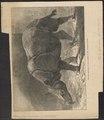 Rhinoceros unicornis - 1874 - Print - Iconographia Zoologica - Special Collections University of Amsterdam - UBA01 IZ22000207.tif