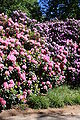 Rhododendronpark Bremen 20090513 110.JPG