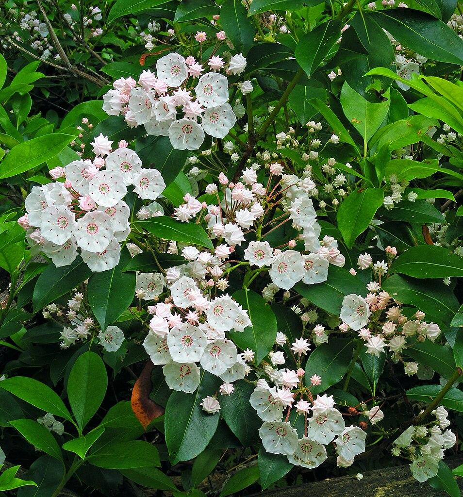 blooming glen dating Nina dobrev and orlando bloom are dating: source   peoplecom 2000 x 1333 jpeg 304kb wwwglamourmagazinecouk  are nina dobrev and glen powell dating proof .