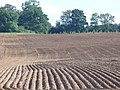 Ridge and Furrow - geograph.org.uk - 536869.jpg