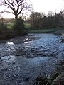 River Lew below Rutleigh - geograph.org.uk - 332499.jpg