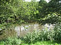 River Teme, Burford - geograph.org.uk - 909837.jpg