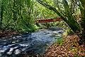 River in harrietville trout farm.jpg