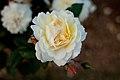 Rose, Moonsprite - Flickr - nekonomania (7).jpg
