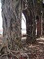 Ross Island Andaman 4140017.JPG