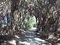 Rotorua, Nueva Zelanda - panoramio (1).jpg