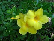 Rukaththana Flowers