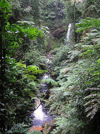 Nyungwe Forest - River in Nyungwe Park, Rwanda