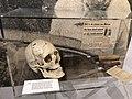 STAM - FGP Gent - PJF Gand - Musée du crime - Museum van de misdaad - police judiciaire - gerechtelijke politie 20.jpg