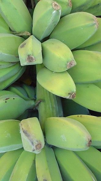 Saba banana - The angular squarish fruits of the saba banana.