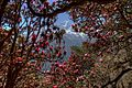 Sagarmatha National Park-Namche Bazar to Tengboche 2013-05-01 10-01-32 hdr.jpg