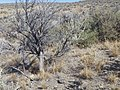 Sagebrush steppe near Magic Resevoir (9675591316).jpg