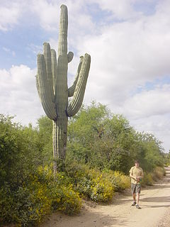 Saguaro, Arizona