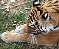 Saint Louis Zoo 036.jpg