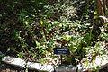 Salvia regla - Zilker Botanical Garden - Austin, Texas - DSC08761.jpg