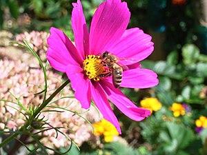 Schmuckkörbchen mit Biene.jpg