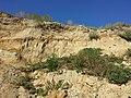 Schottergrube nordwestlich von Asparn an der Zaya sl14.jpg