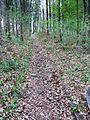 Schwäbisch-Fränkischer Wald, Wanderweg - panoramio.jpg