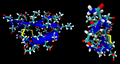 Scorpio-toxin-p01 1ACW.png