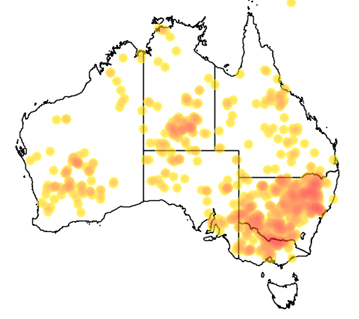 Scotorepens balstoni Occurrence records map