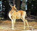 Seen at Olympic Ridge (9449409733).jpg