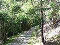 Sentier du Buttereau Parc national des Hautes-Terres-du-Cap-Breton.jpg