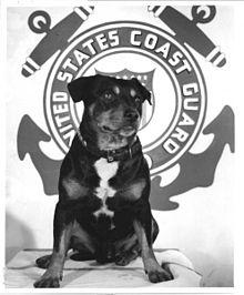 Sinbad (dog) - Wikipedia