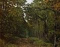Sisley - avenue-of-chestnut-trees-near-la-celle-saint-cloud-1867.jpg