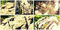 Skribina Sanctuary WRP BG01.jpg